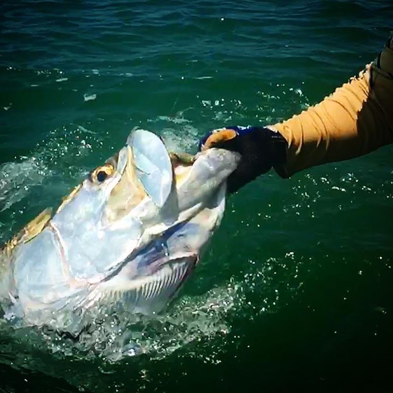 angler holding a boca grande tarpon