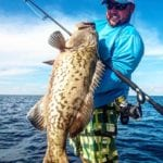 A large grouper caught on a nearshore fishing trip