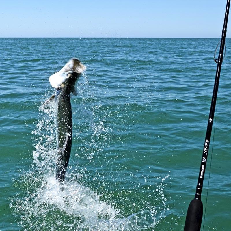 an angler fighting a boca grande tarpon